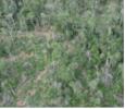 Imagem INPE divulga dados de degradação na Amazônia