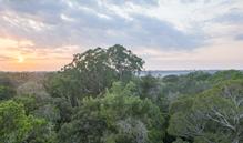 Imagem Pesquisa busca entender limites do crescimento da floresta