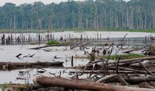 Imagem INPE investiga processos que caracterizam o desmatamento na Amazônia