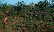 Imagem DETER Cerrado registra 697,98 km² de alertas em abril