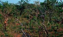 Imagem DETER Cerrado registra 401,9 km² de desmatamento em março