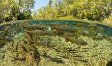 Imagem Simpósio de geotecnologias aplicadas ao Pantanal recebe trabalhos