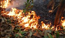 Imagem Incêndios florestais dominam as emissões de carbono durante secas na Amazônia