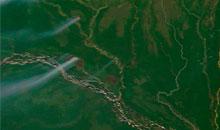 Imagem Manejo sustentável pode salvar a Amazônia das queimadas