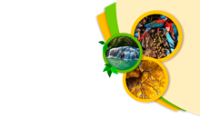 Imagem GeoPantanal discute desenvolvimento sustentável do bioma