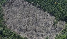 Imagem INPE e IBAMA realizam validação de dados inéditos do DETER em Rondônia