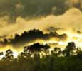 Imagem Novo estudo analisa o futuro climático da Amazônia