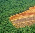 Imagem TerraClass mapeia uso e cobertura da terra da Amazônia
